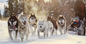 a dog sled team
