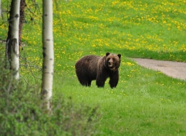 4 Wildlife Safety Tips for Your Next Trip to Canmore and Kananaskis 4