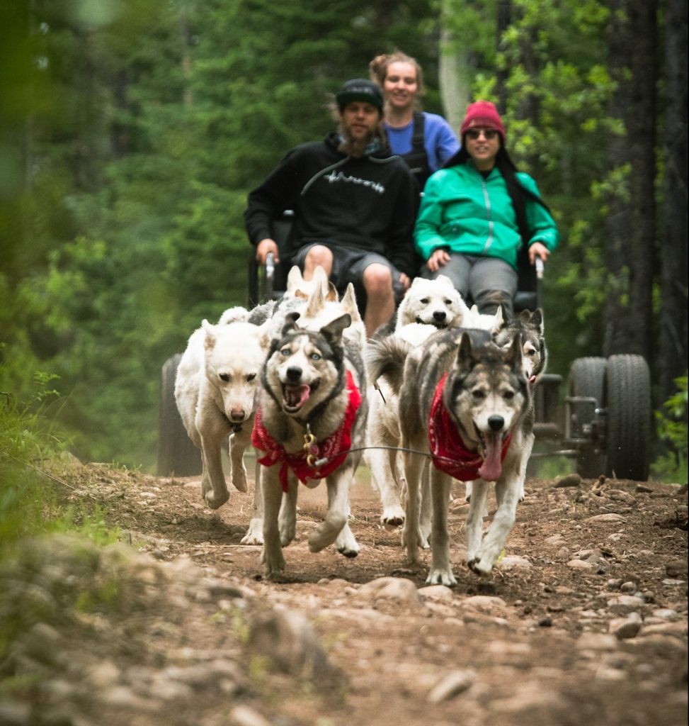 Discover What's New in Canmore