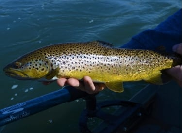Canmore Fishing Adventures